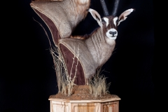 Pro-Taxidermy-Brush-Country-21-1