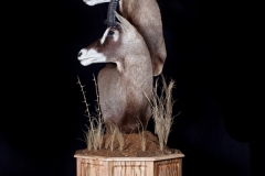 Pro-Taxidermy-Brush-Country-22-1