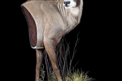 Pro-Taxidermy-Brush-Country-45-1