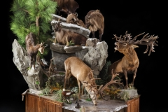 Pro-Taxidermy-Brush-Country-60