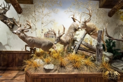 Pro-Taxidermy-Brush-Country-19