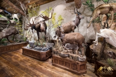 Pro-Taxidermy-Brush-Country-20