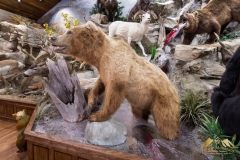 Pro-Taxidermy-Brush-Country-22
