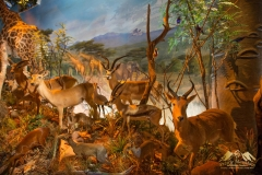 Pro-Taxidermy-Brush-Country-38