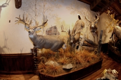 Pro-Taxidermy-Brush-Country-7